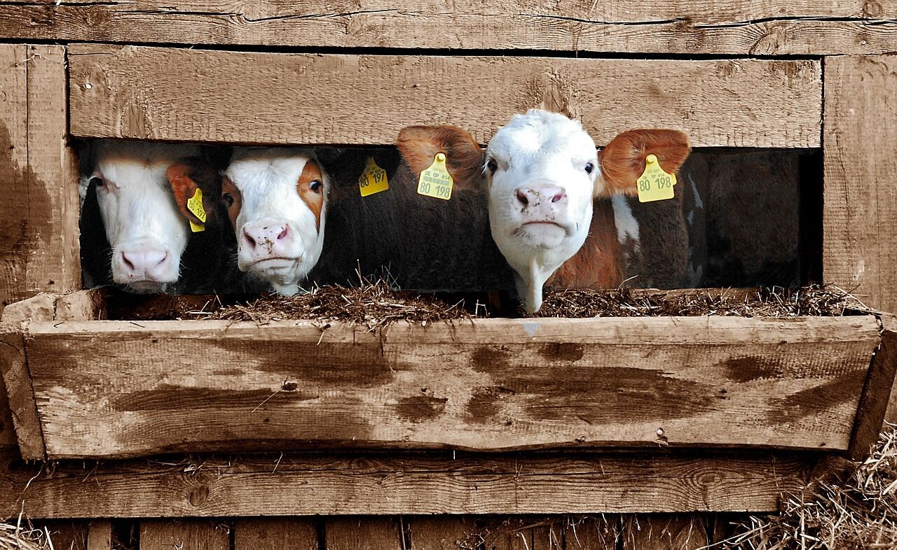 Image for Familie mit Bauernhof gesucht!