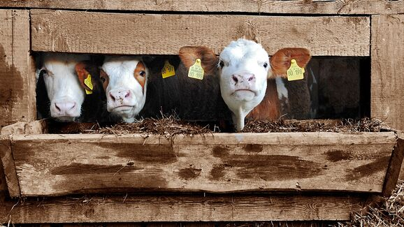 Familie mit Bauernhof gesucht